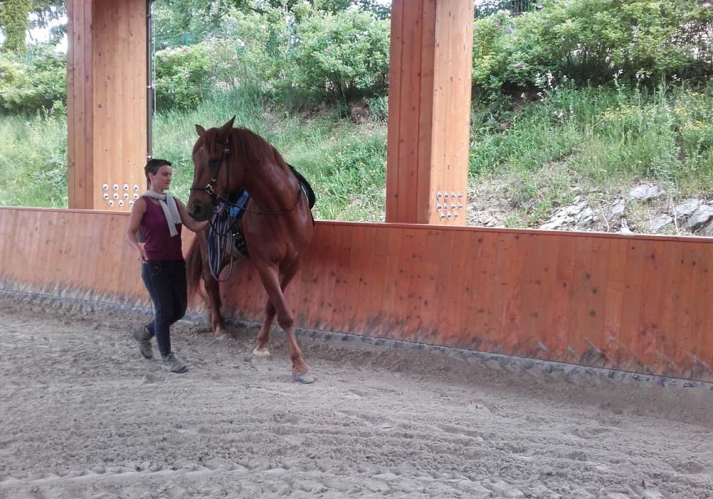 celostni_trening_konja