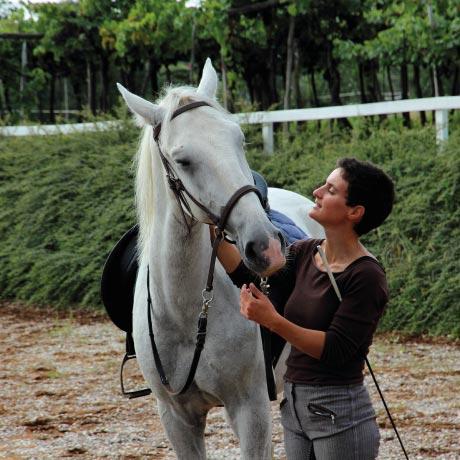 vzgoja_in_trening_konj