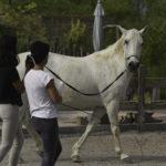 Pridobi pozornost konja