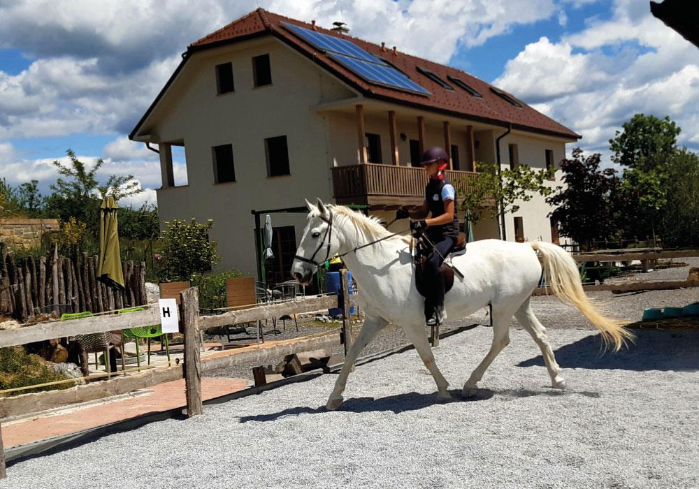 ucenje_jahanja_konj